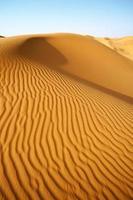 öknens kameler foto