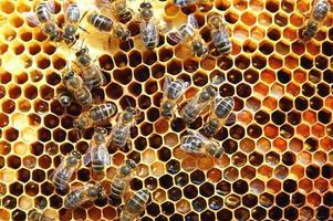hårt arbetande bin på honungskaka i bigården