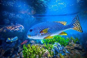 färgglada akvarium foto