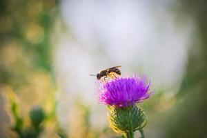 bi stående på en blomma foto