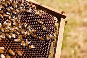 närbild av arbetsbina på honungskaka. foto