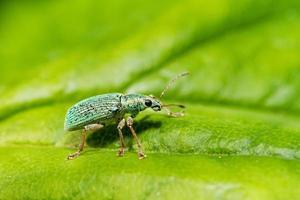 vev på grönt foto