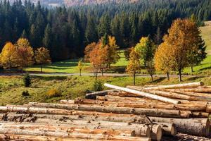 loggar på en sluttning nära skogarna foto
