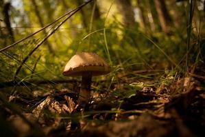 svamp i skogen på nära håll foto