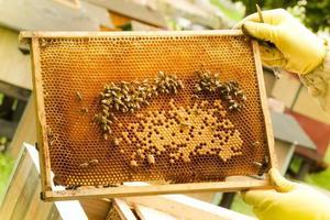 biodlare som håller en ram med honungskaka foto