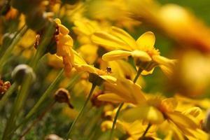 detaljer om melbourne trädgårdar foto