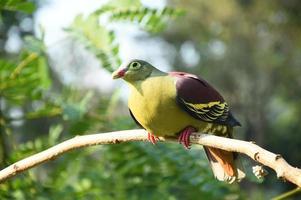 vacker fågel på trädet foto