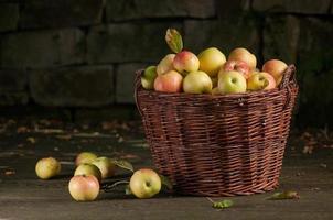 färsk skörd av äpplen. höstträdgårdsskötsel. foto