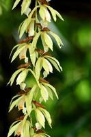 vilda orkidéblommor foto
