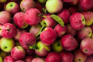 röda äpplen bakgrund foto