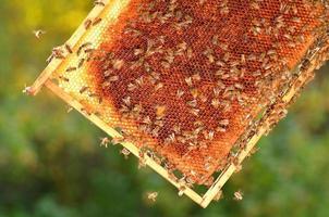 hårt arbetande bin på honungskaka i bigården foto
