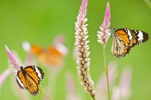 orange fjäril på blomman foto
