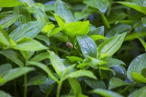 sniglar grönt blad foto