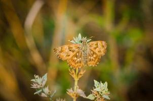 brun fjäril som vilar på gräset foto