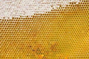 honungskaka med färsk honung foto