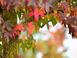 hösten koncept