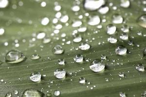 en bild av gräs med regndroppar foto