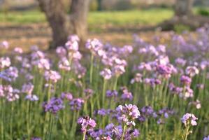 blommigt fält foto