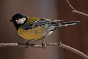 detaljer av fjädrarna foto