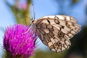 fjäril på en blomma foto