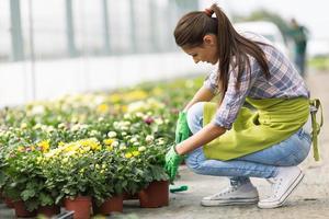 ung kvinna trädgårdsskötsel i växthus. foto