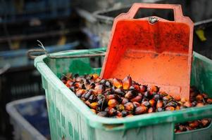 olja palmfrukter