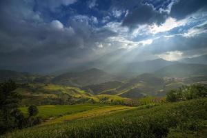 risgård i Vietnam