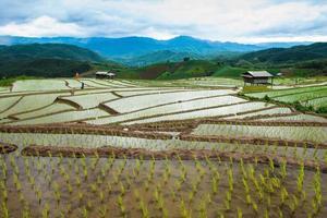 terrasserat risfält i Chiangmai norr om Thailand foto