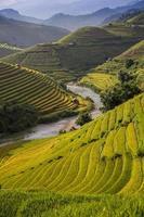 risgård i Vietnam foto