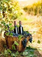 flaskor rött vin och druvor i korg foto