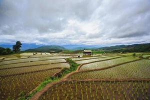 risfält, papongpieng, Chiang Mai, Thailand. foto