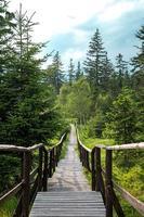 trä gångbro med ledstänger foto