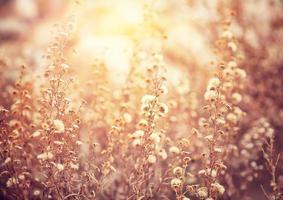 vackra blommor fält foto
