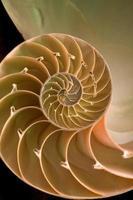 skiva av en nautilusskal foto