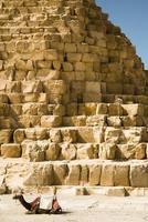 kamel på bakgrunden av egyptiska pyramider