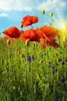 fantastiskt landskap med blommor vallmo mot himlen och sunr foto