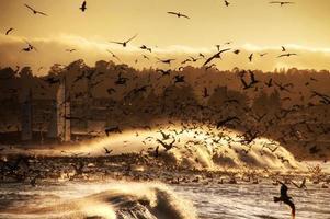explosion av fåglar foto