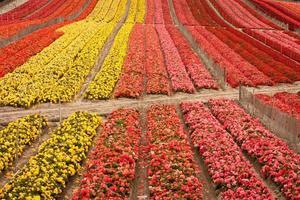 blomma fält foto