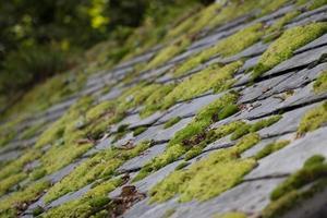 mossa på takplattor
