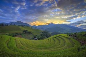 risterrass i Vietnam foto