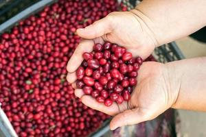 rödbär med lövträd foto