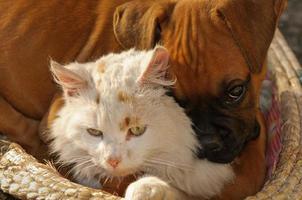 som katter och hundar foto