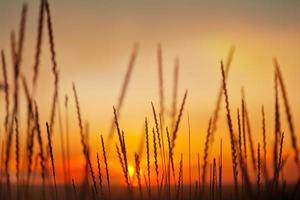 spikelets på bakgrunden av solnedgånghimlen foto