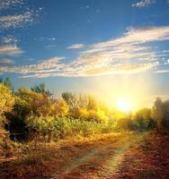 väg under hösten foto