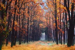 gränd i höstens park.