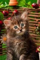 söt kattunge foto