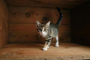 katt som leker i en låda