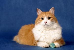 mystisk katt foto