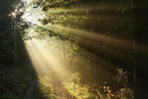 stig i höstskog på en dimmig morgon