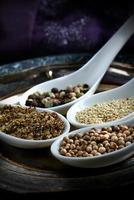 indiska kryddor foto